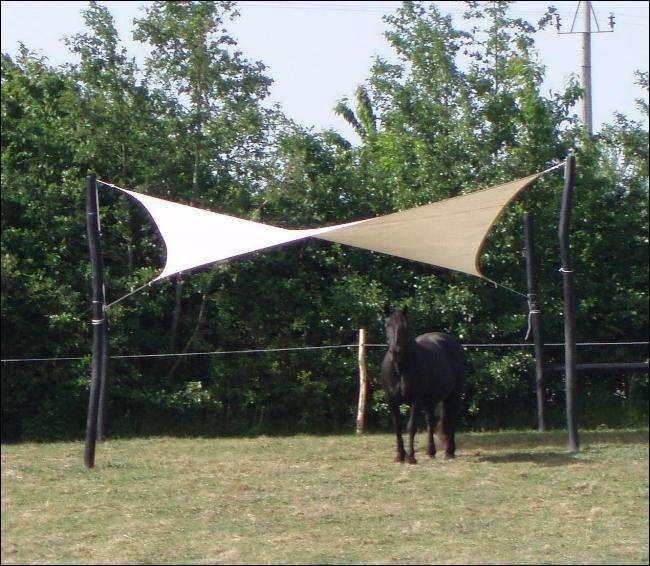 hestesejl - firkantsejl