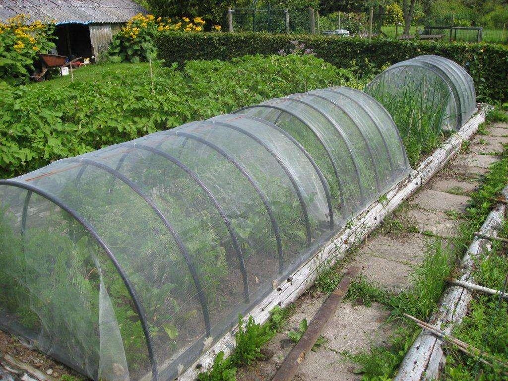 insektnet - beskyt dine grøntsager