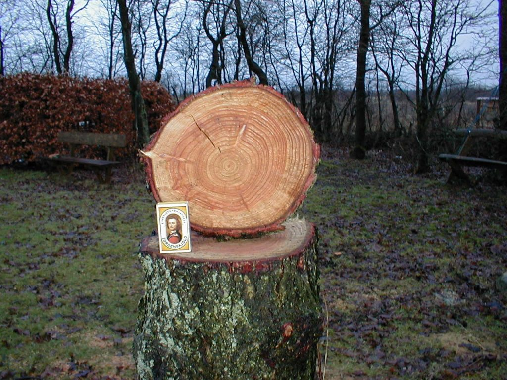 Lærketræ tømmer og brædder