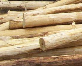 afbarkede træstolper